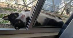 Gato e pets precisam de rede de proteção