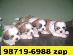 Canil Filhotes Pet Premium Cães BH Lhasa Yorkshire Bulldog Shihtzu Maltês