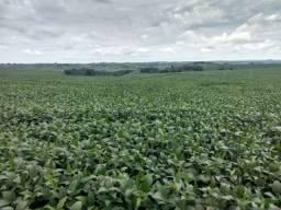 Título do anúncio: Fazenda de Soja a venda ao lado de Londrina-Melhor terra para Soja do Brasil