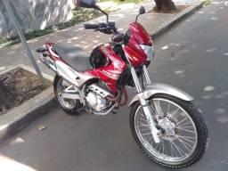 FALCO 2008