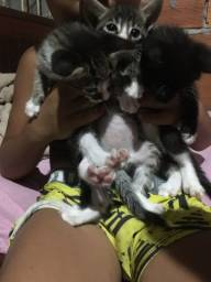 Estou doando gatinhos