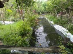 R$ 150 mil reais sitio com 3 hectares , escriturado a 23 km de Castanhal
