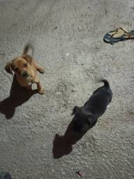 Doa-se cães filhotes