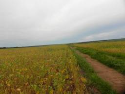 Fazenda* no MS - Oportunidade de negócios