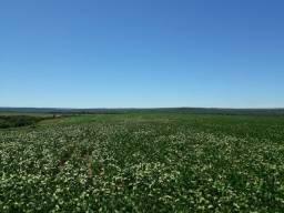 Fazenda c/ 620he, plantando em 200he, 240he em pastagens, Itiquira-MT