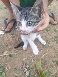 Doação de gatinhos urgente!!!!!