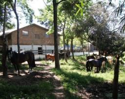Cavalos- Venda e Assessoria de Compra