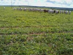 Fazenda c/ 1.350he c/ 80% formado, planta em 600he, Itiquira-MT, pego imóvel no PR