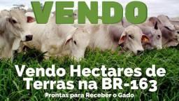 Vendo hectares de terra. Na região do Pará