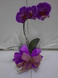 Orquídeas e flores Dia das Mães