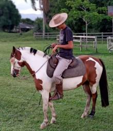 Título do anúncio: Cavalo Oveiro
