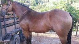 Vendo 2 cavalos um de esteira e um de direita