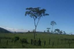 Fazenda de pecuária de grande porte