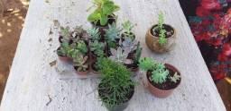 PLANTAS JM LTDA TODOS OS TIPOS DE PLANTAS