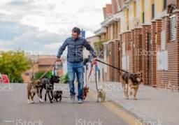 Paseador de cães