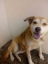 Doação Cachorrinha Linda - Doa-se Cacau * Castrada