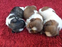 Cinco lindos machinhos