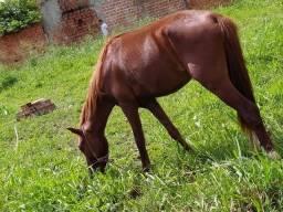 Vende-se um cavalo 2,000,00