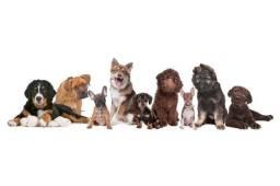 Procuro cachorro de pequeno porte para adoção