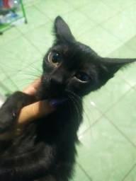 Doação responsável de gatinhas