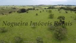 Sítio com 9 alqueires, bela área verde, ótima localização (Nogueira Imóveis Rurais)
