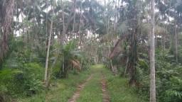 104 hectares com 45 mil pés de açai produzindo por 800 mil há 70 km de Belem zap 988697836