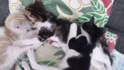 Adoção de 3 gatinhos