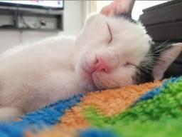 Gato doação filhote
