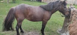 Cavalo (Petiça)