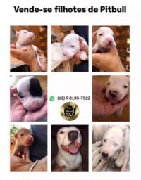 Pitbull pedigree