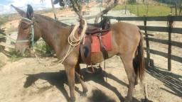 2 burros  a venda!!!