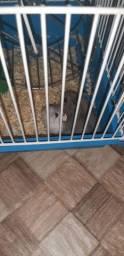 2 Hamester com gaiola e ração