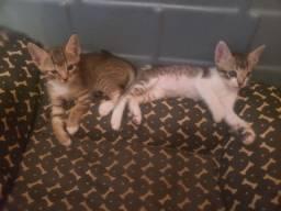 Doação de gatinhas .sou da Rasa. Zap *