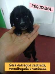 Bebê cachorrinha para Adoção RESPONSÁVEL