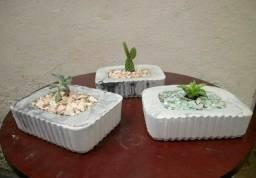 Vasinhos com suculentas (Ipatinga MG)