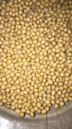 Sementes fiscalizada de soja e milho