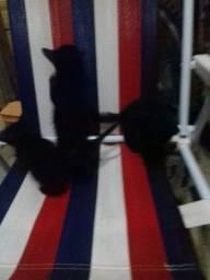Doação gatos filhotes