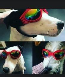 Óculos para dogs