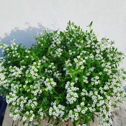 Vendemos vasos com plantas,pelo um precinho bem acessível....