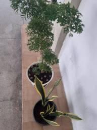 Plantas !!