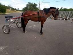 Cavalo diferenciado