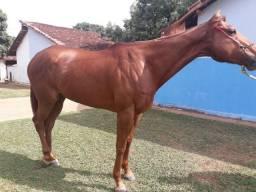 Cavalo Psi