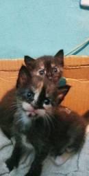 Adocao gatinhas filhotes