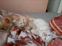 Gatinhos filhotes
