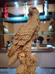 Águia branca com dourada