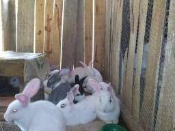 Doação de coelhos brancos