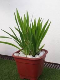 Plantas paißagismo