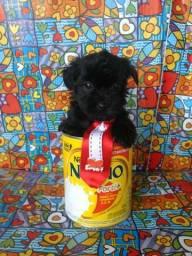 Poodle micro toyzinhos 974461159