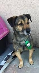 Doação de cachorro (Leia a descrição)