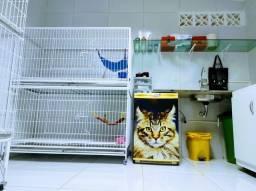 CGT - Centro para Gatos em tratamento.